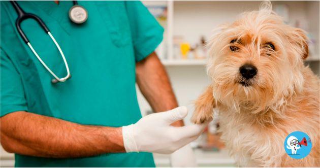 Convocatorias veterinarios